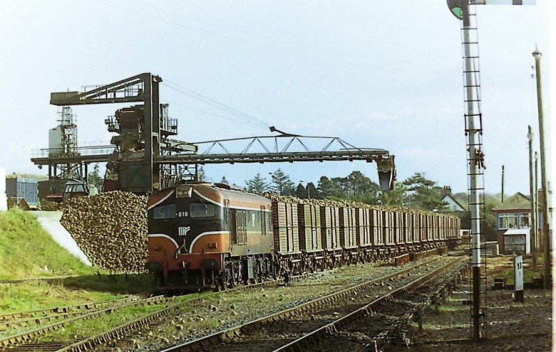 Photographs Supplied and Copyright Of Ernie Shepherd - Wellingtonbridge Railway Station, Wexford 2